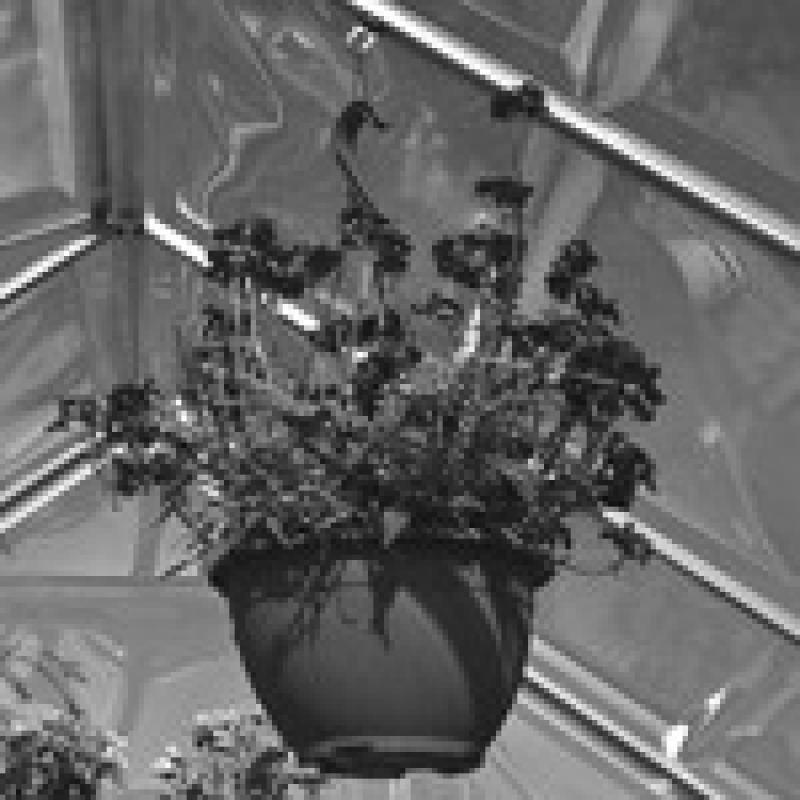 Tepro Pflanzenhalter 10er Set